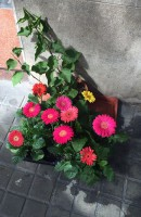 Las flores en la calle / Flowers in the street